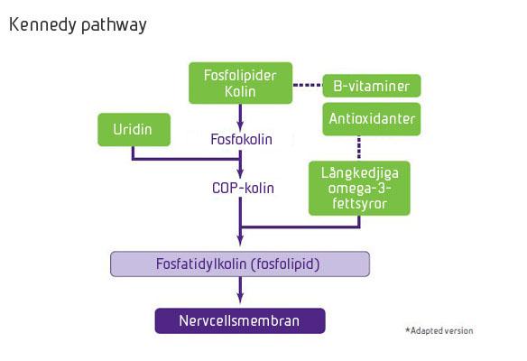 Nutricia Souvenaid Kennedy pathway